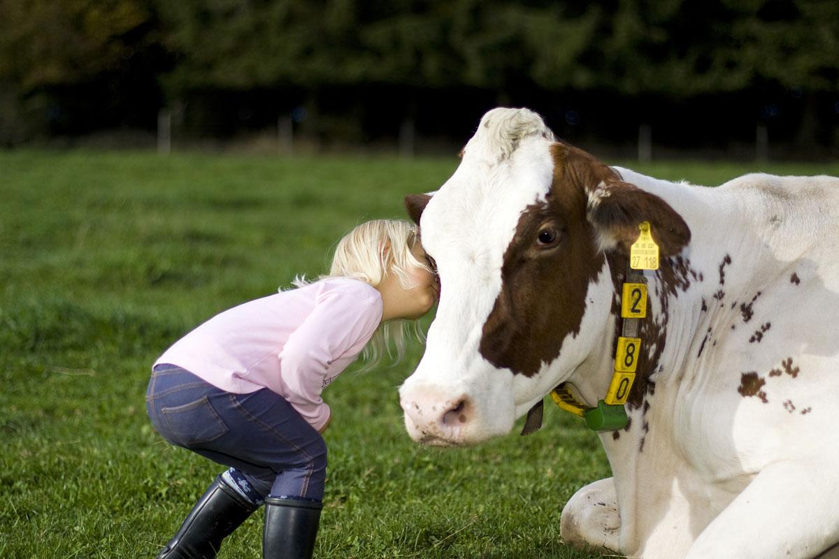 Kind und Kuh auf der Weide