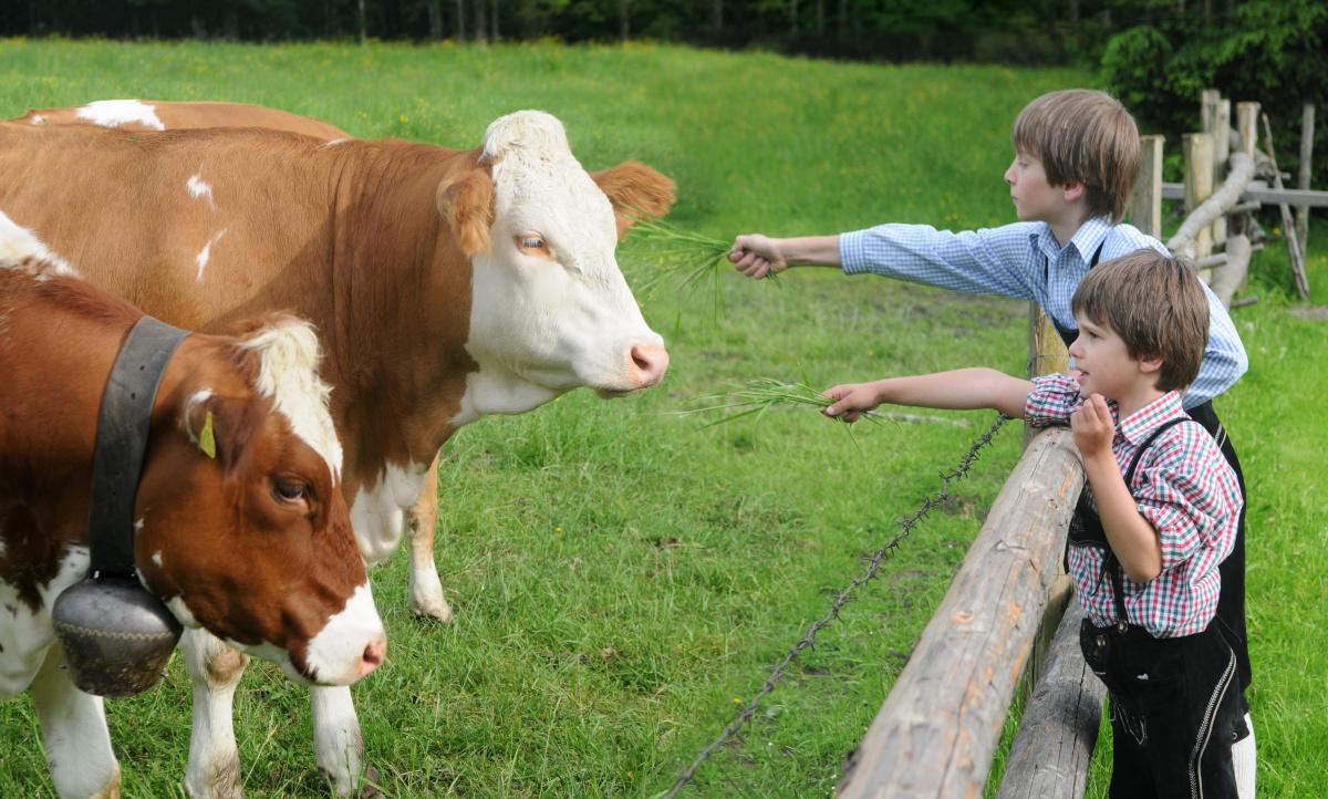 Besuch bei den Kühen auf der Weide beim Bauernhofurlaub in Süddeutschland