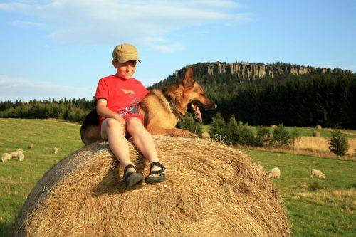 Die Sommerzeit auf dem Bauernhof genießen