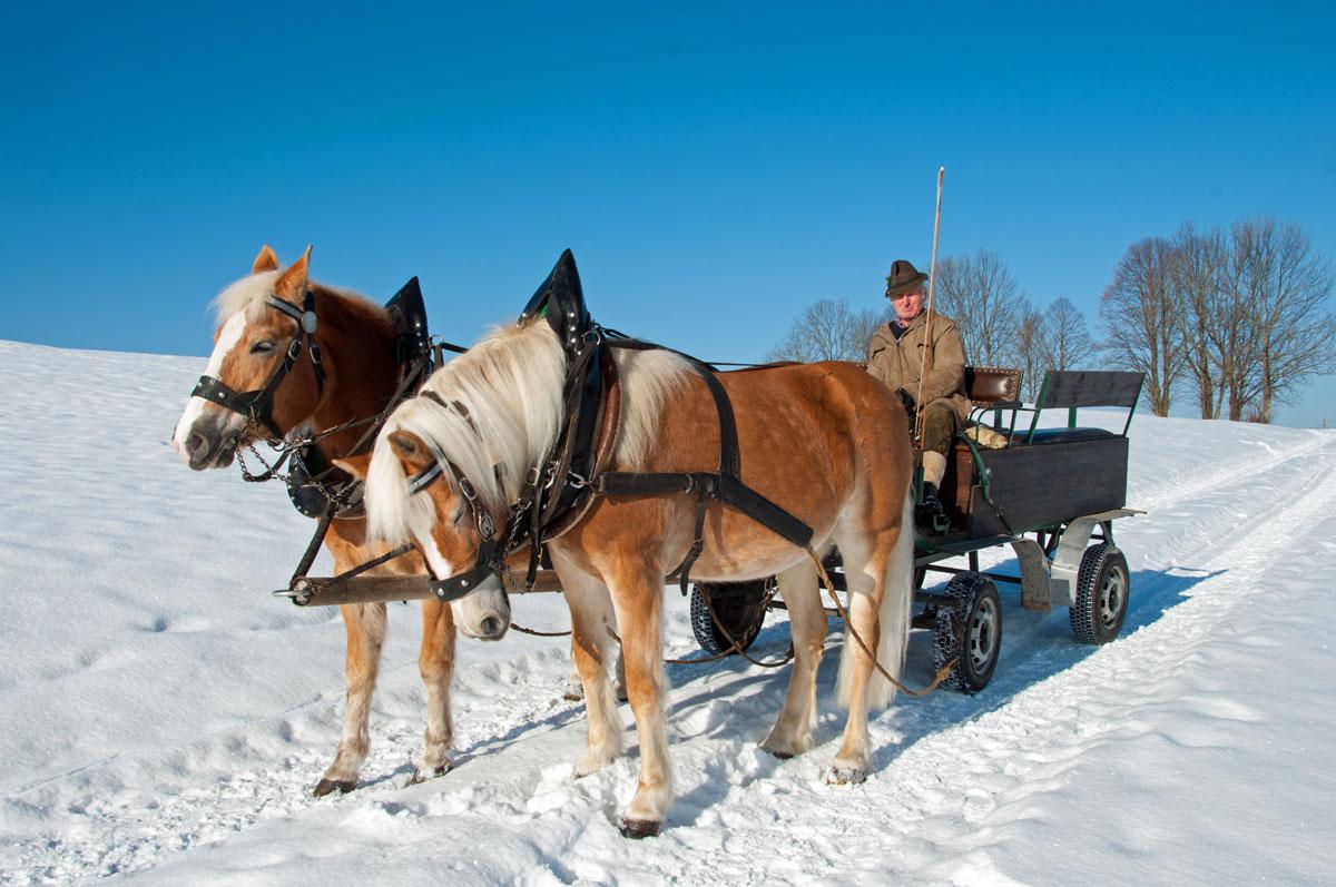Auf zur Pferdeschlittenfahrt