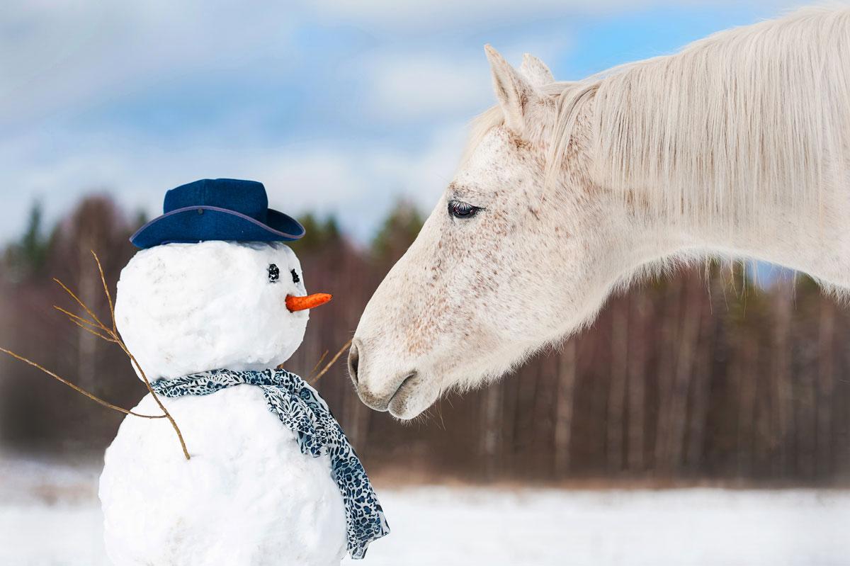 Winter 2019/2020: Bauernhofurlaub genießen