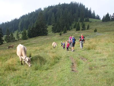 Almwanderung  im Rupertiwinkel Berchtesgaden