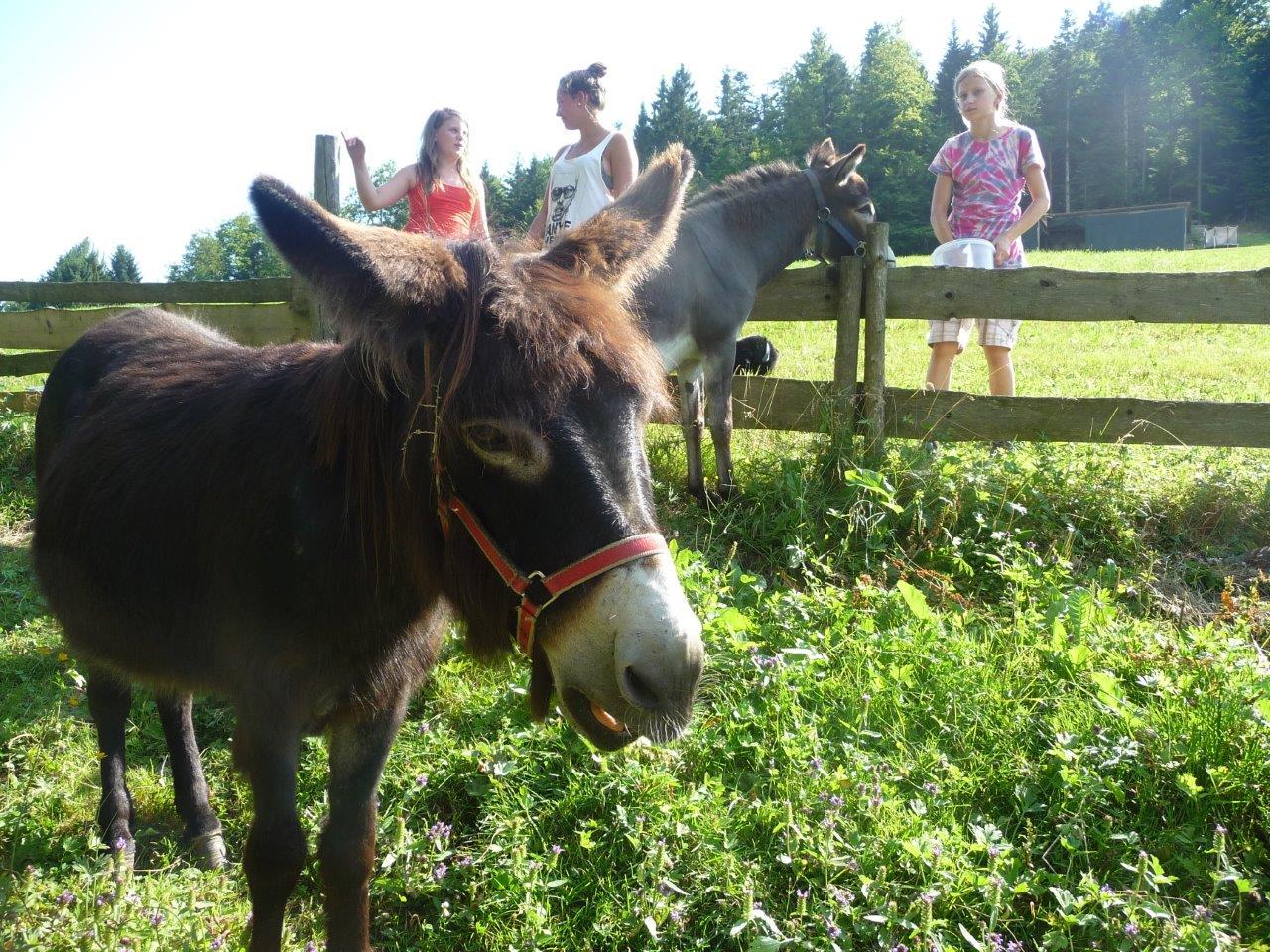 Auch Esel leben auf dem Ranzinger Hof