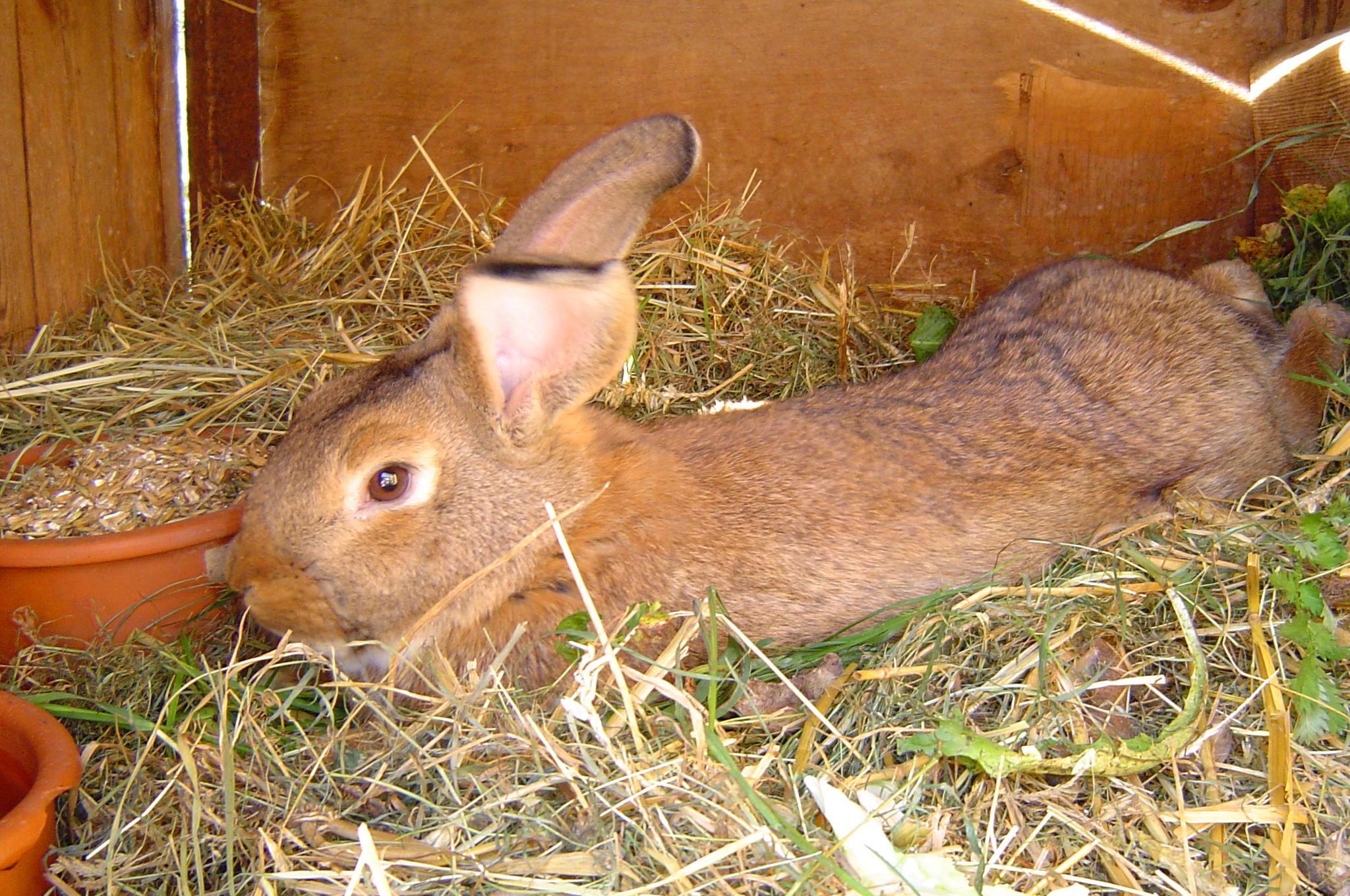 Auch Hasen gibt es auf dem  Reiter - & Erlebnisbauernhof Berlinchen