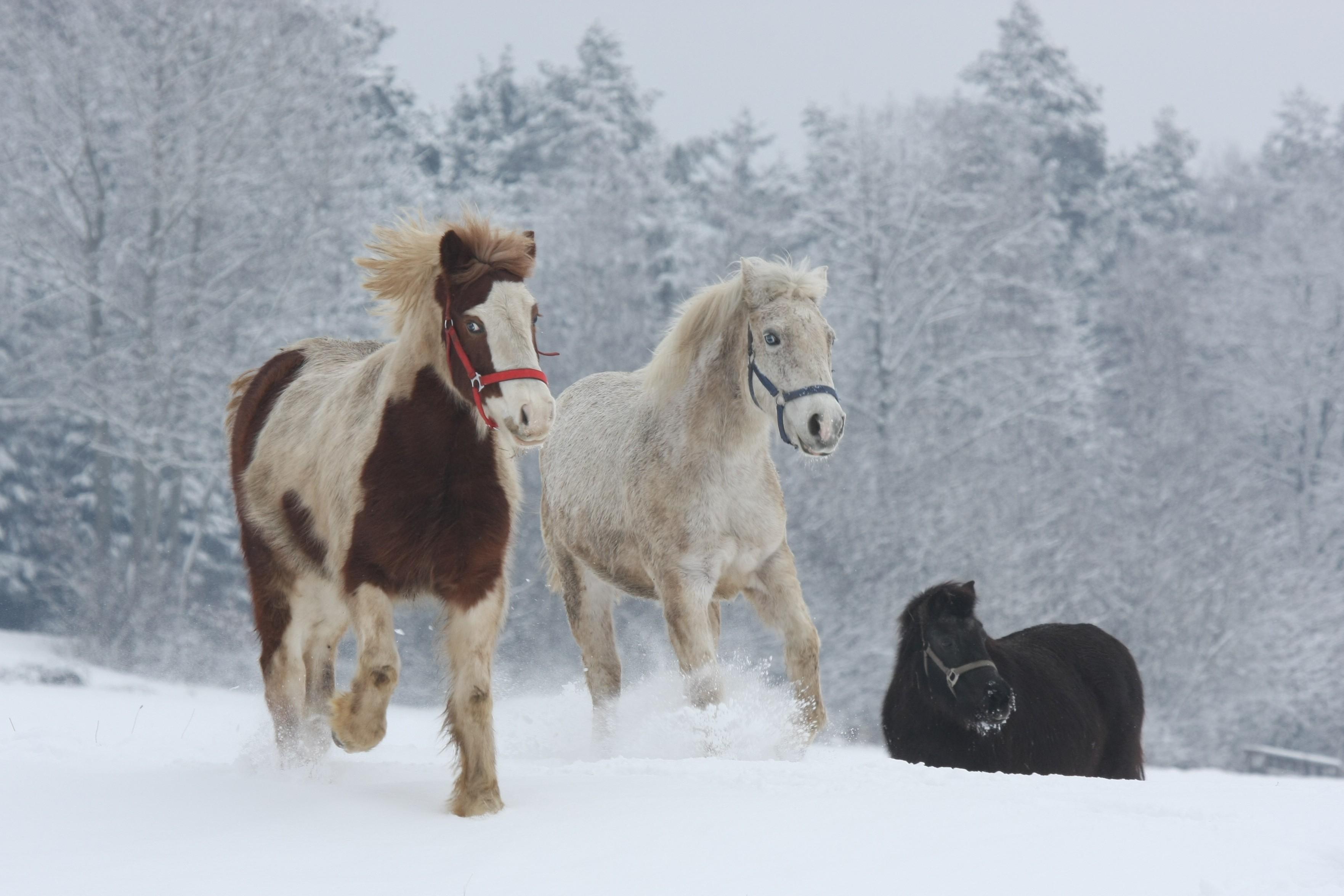 Auch im Winter eine Reise wert auf dem Ferienhof Kilger