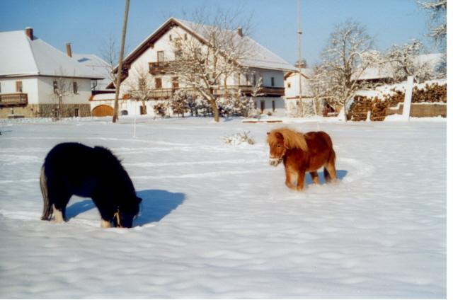 Auch im Winter eine Reise wert zum  Bauernhof Gründinger