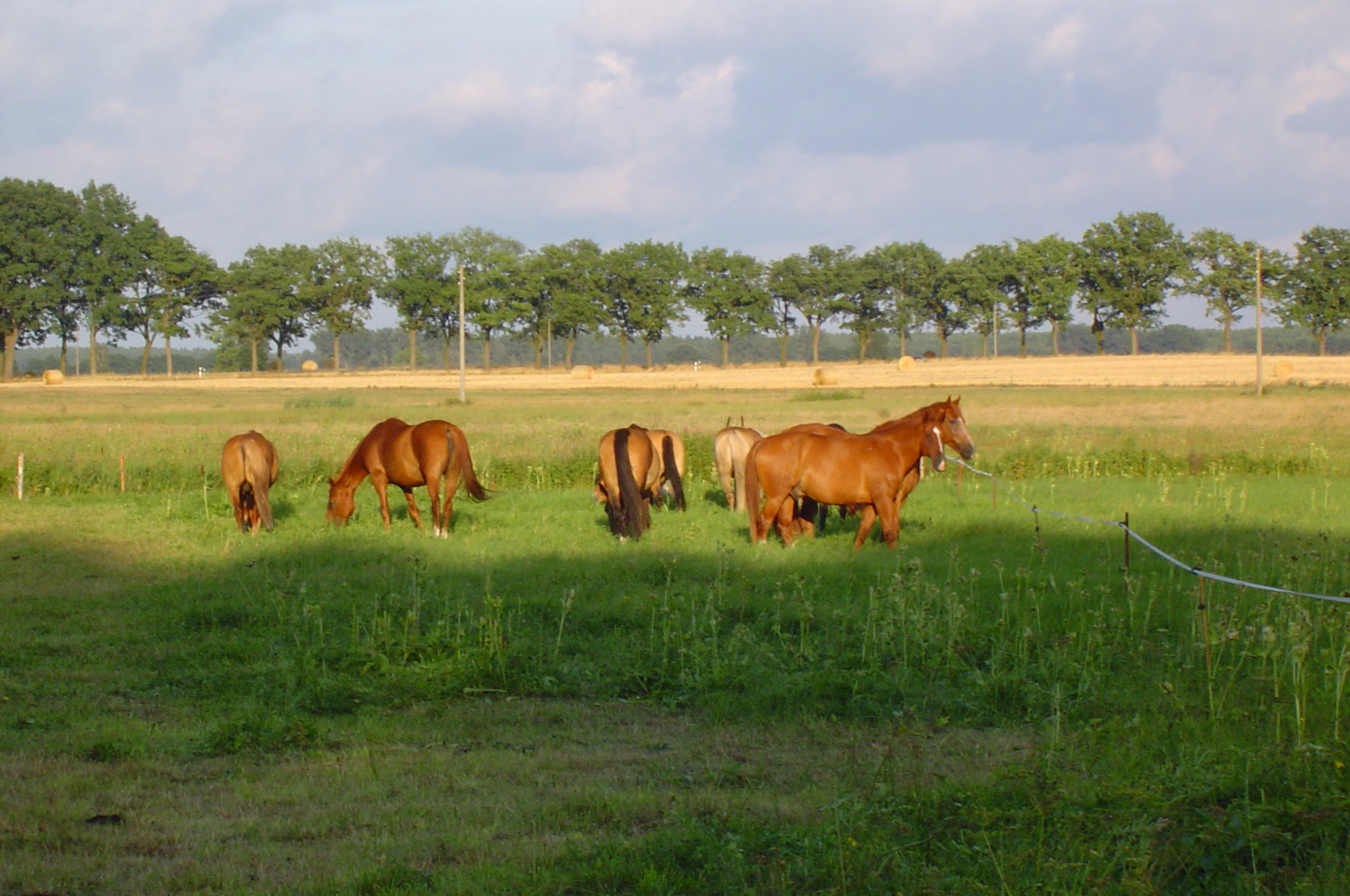 Auf der Weide  vom Reiter - & Erlebnisbauernhof Berlinchen