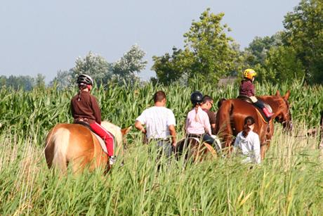 Aktiv sein – Reiterhofurlaub auf dem Ferienhof Peter an der Nordsee