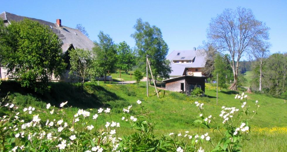 Titisee und Feldberg laden vom Balzenhof aus zum Herbstwandern ein