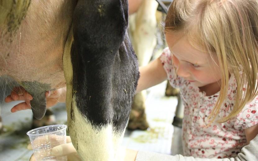 Wie wird aus Gras Milch?