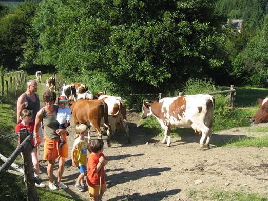 Beim Küheeintreiben