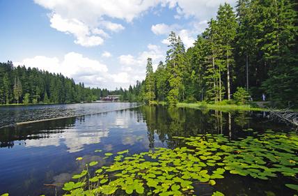 Naturschutzgebiet Grosser Arbersee