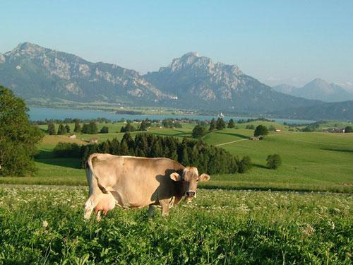 Die Faszination der Berge: Bauernhofurlaub in den Alpen