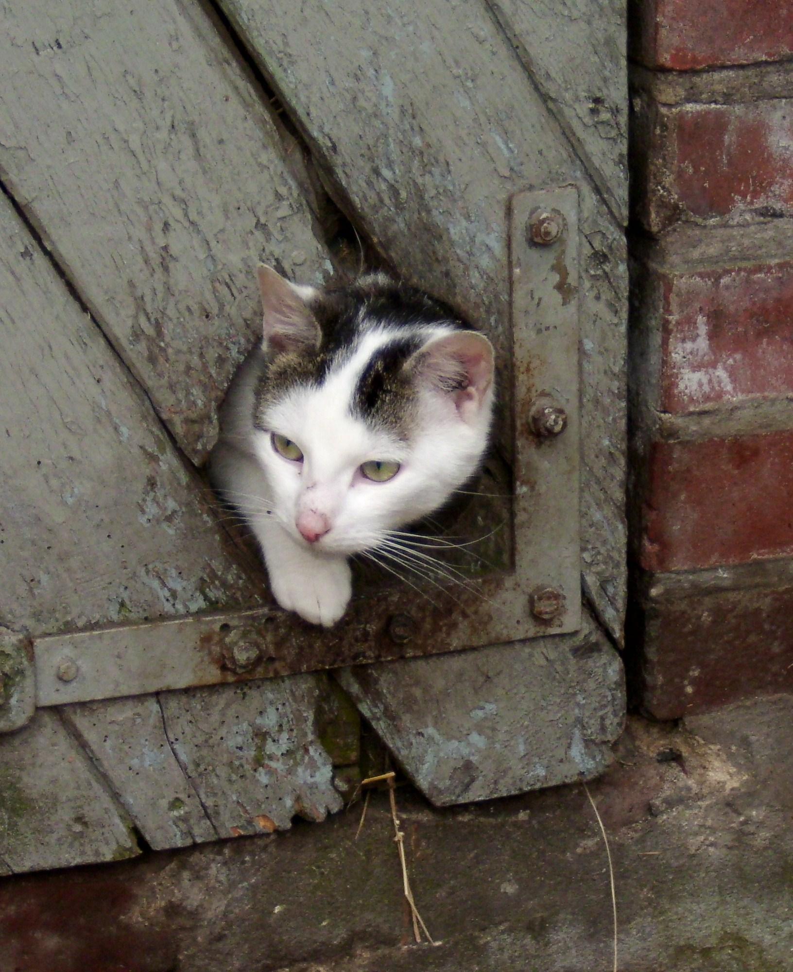 Unsere Katzen sind neugierig Tödter´s Immenhof