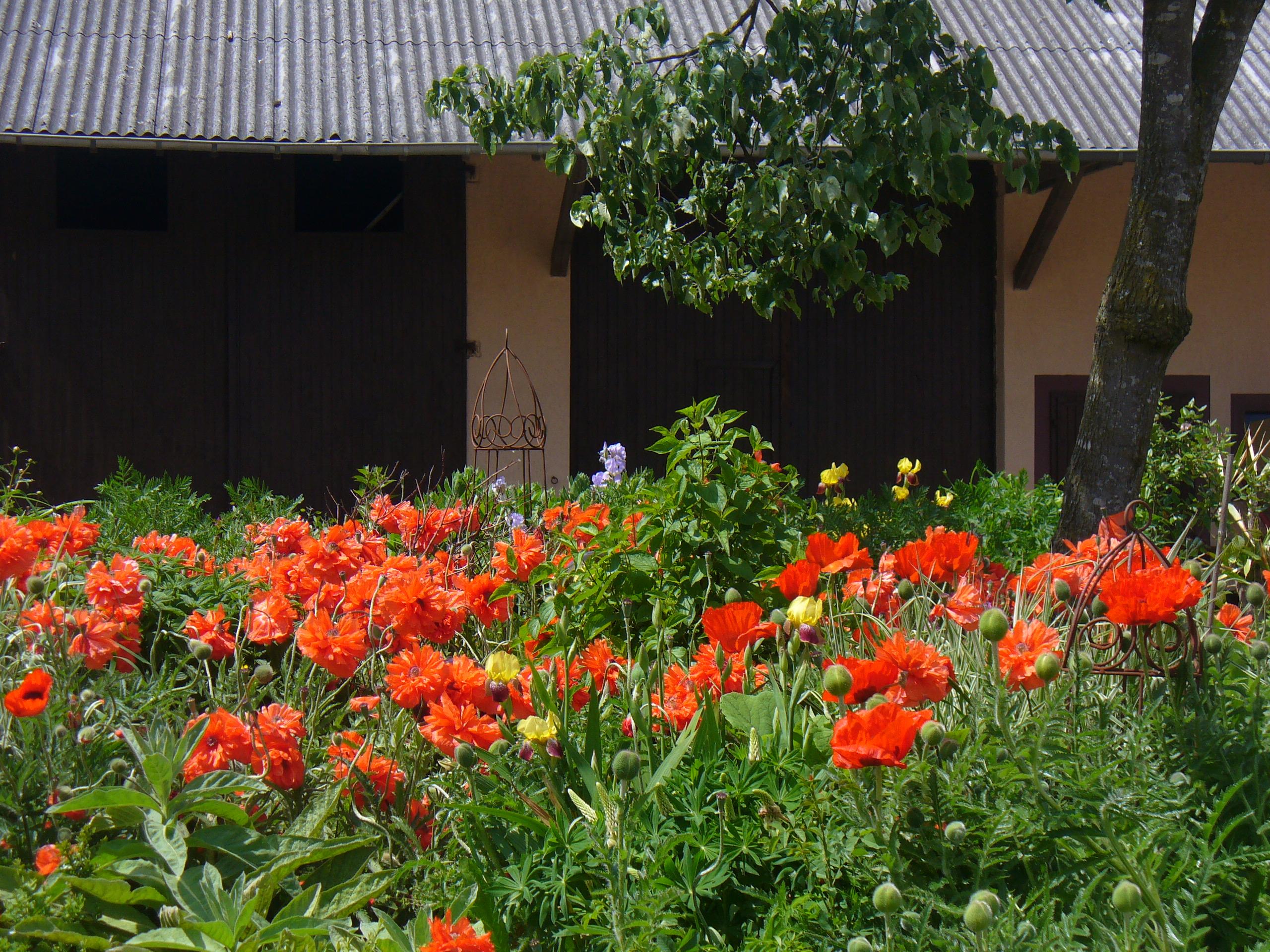 Blütenpracht auf dem Mayischhof