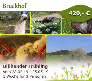 Blühender Frühling auf dem Bruckhof