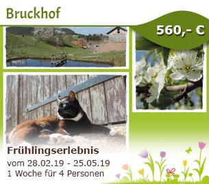 Frühlingserlebnis auf dem Bruckhof