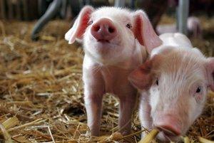 Schäferei & Schweinezucht – das außergewöhnliche Bauernhoferlebnis