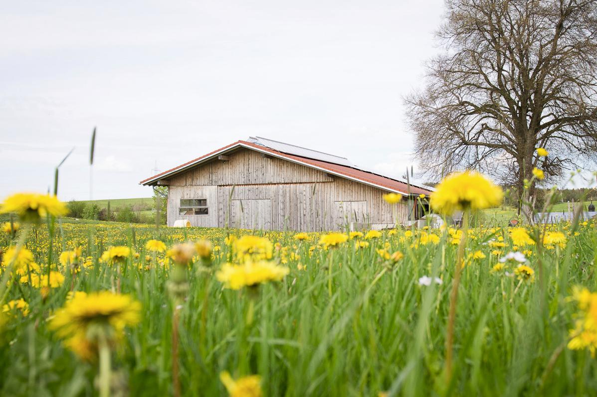 Der Stall vom Bauernhof Ferienwohnungen Schmölz
