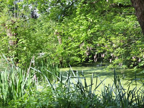 Der Teich auf  der Vita-Farm Bergmann-Scholvien