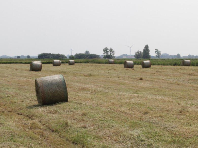 Erntezeit auf dem Ferienbauernhof Hobbie