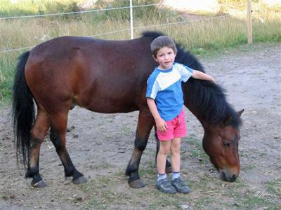 Erste Erfahrungen mit Pferden