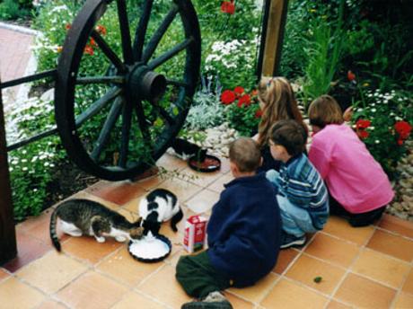Fütterung der Miezekatzen