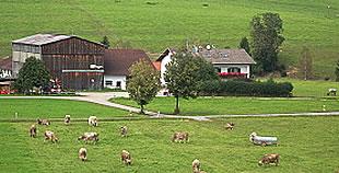 Ferienhof Klöck