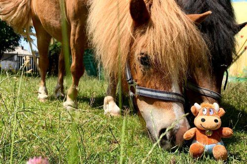 Ferienhof-Ritter-Pferde