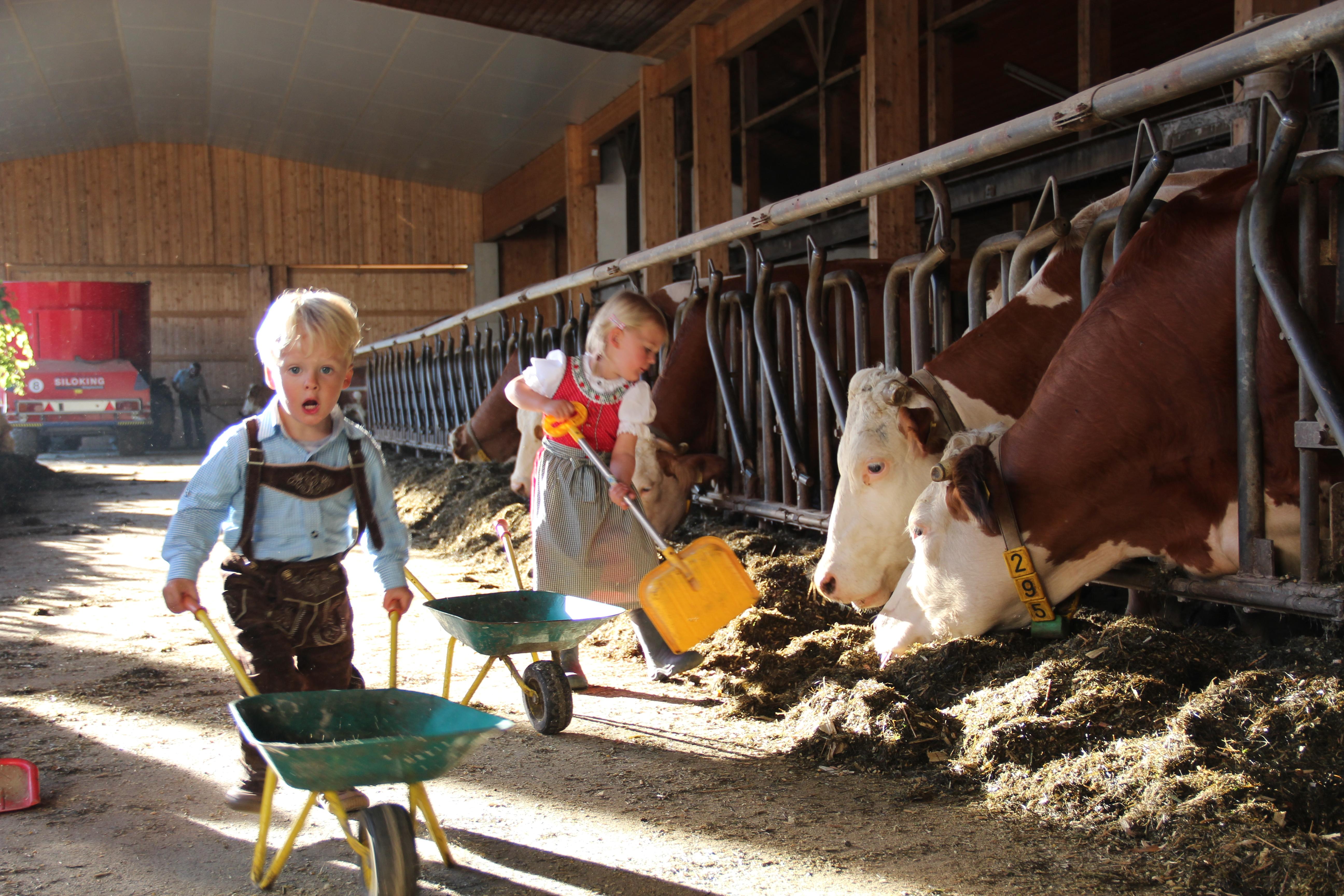 Fleißige Helfer im Stall auf dem Ederhof