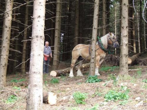 Forstarbeit mit den Pferden auf dem Schellen Hof
