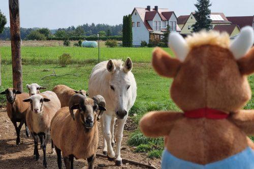 Friederikes-Reisetagebuch-Ferienhof-Esel-und-Schafe
