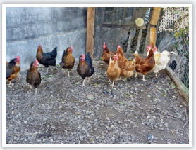 Frische Eier von den Hühnern auf dem Ferienhof Schuler