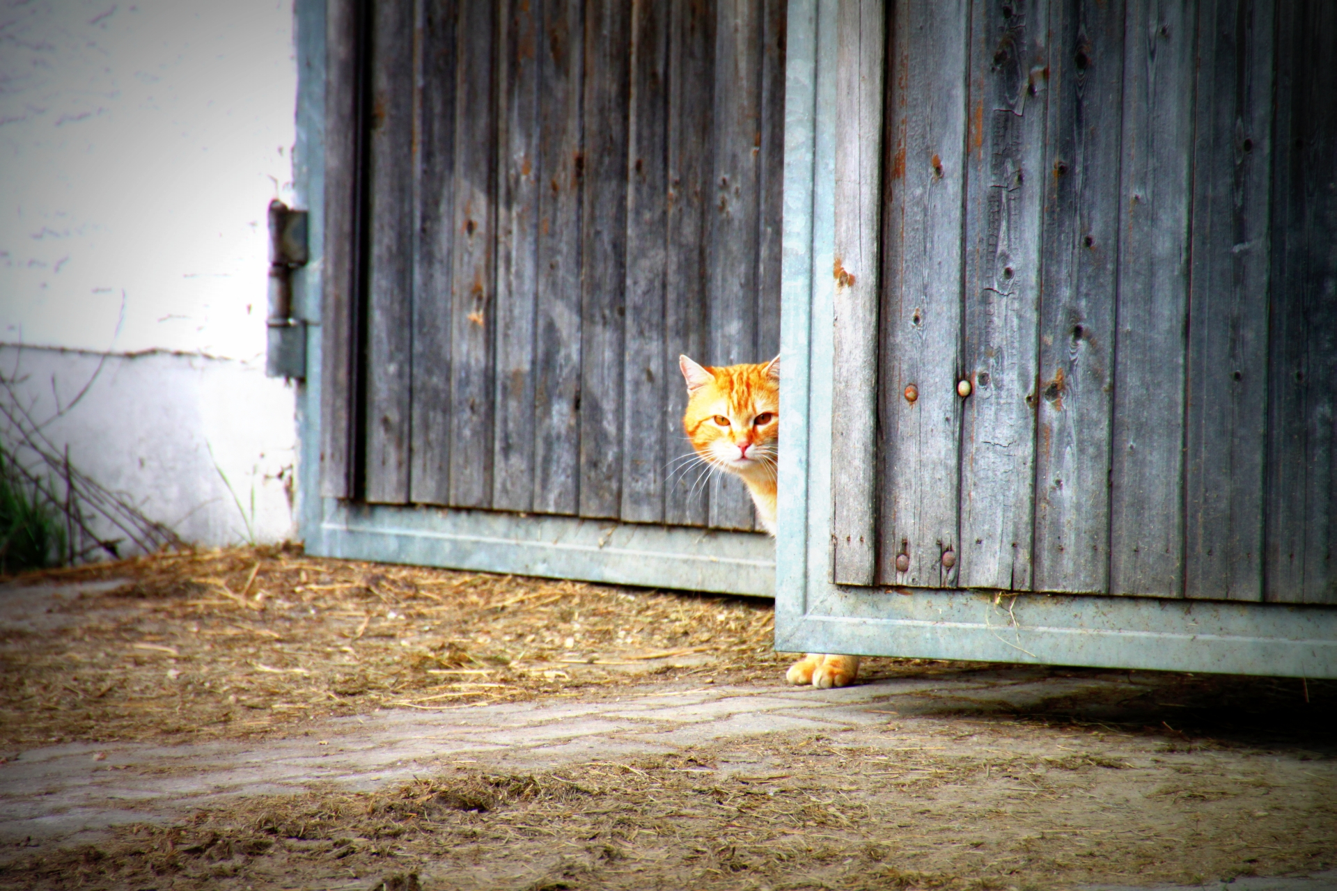 Fuchsl auf dem Landhaus Altweck
