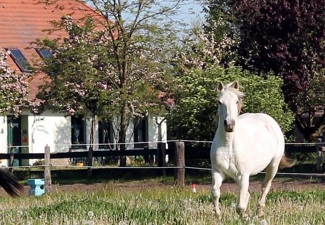 Familienurlaub auf dem Ponyhof Neuholland