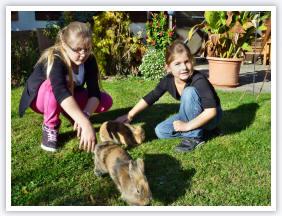 Hasen auf dem Ferienhof Schuler