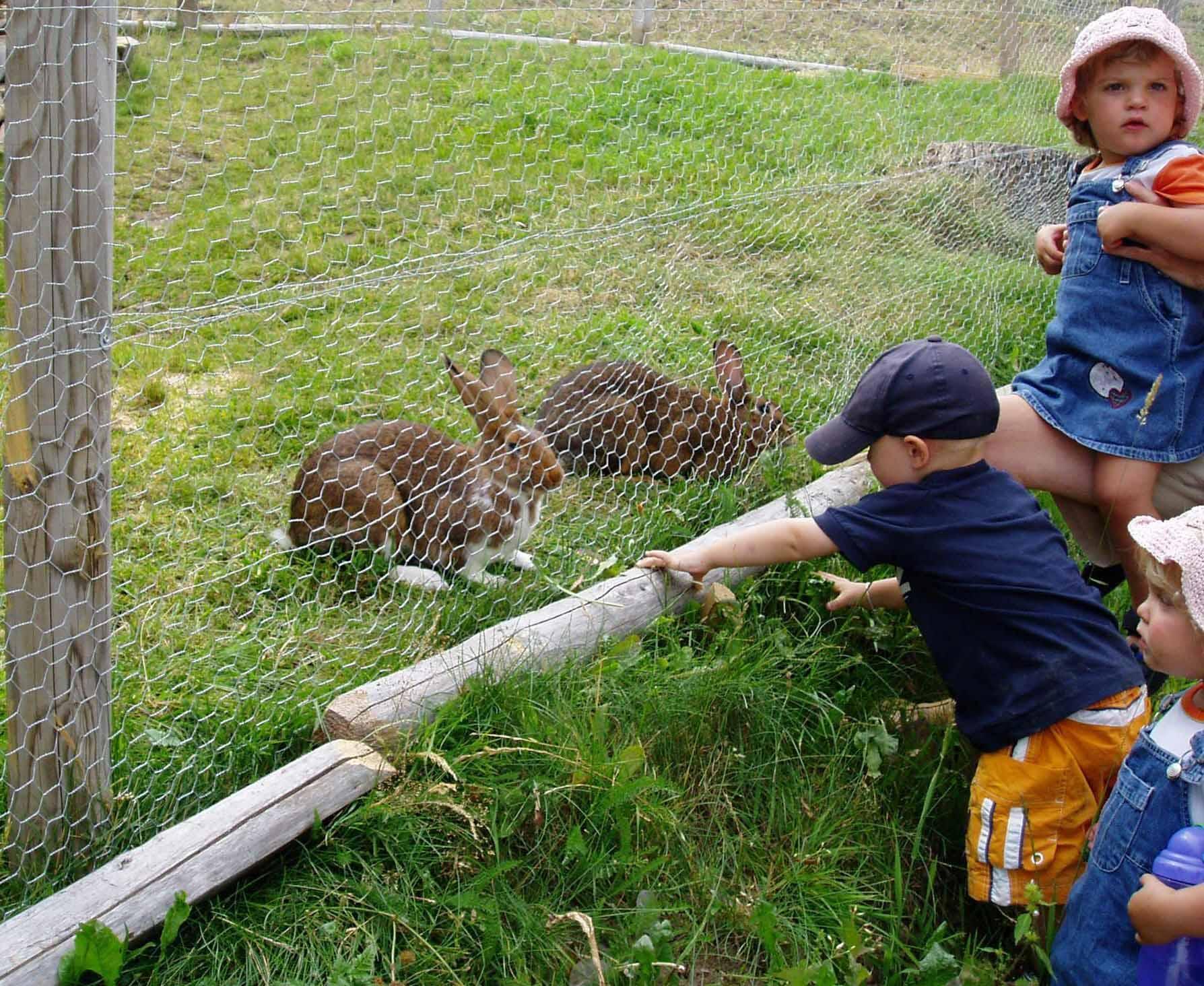 Hasen auf dem Michelthomilishof
