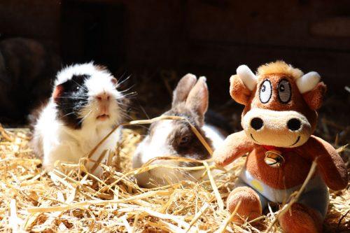 Hasenkammer-Friederikes-Reisetagebuch-Hase und Meerschwein