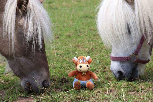 Hasenkammer-Friederikes-Reisetagebuch-Ponys