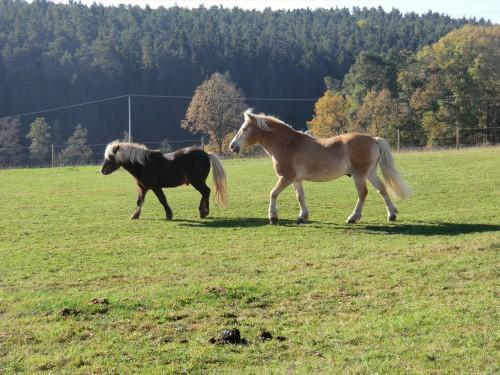 Herbstliche Koppel auf dem Ferienhof Frankenhöhe