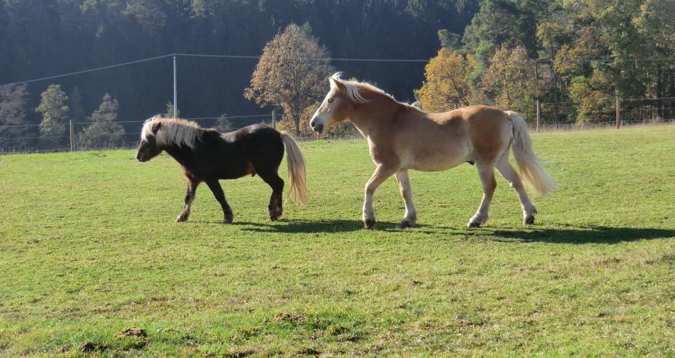 Familien-Bauernhofurlaub auf dem Ferienhof Frankenhöhe im Steigerwald