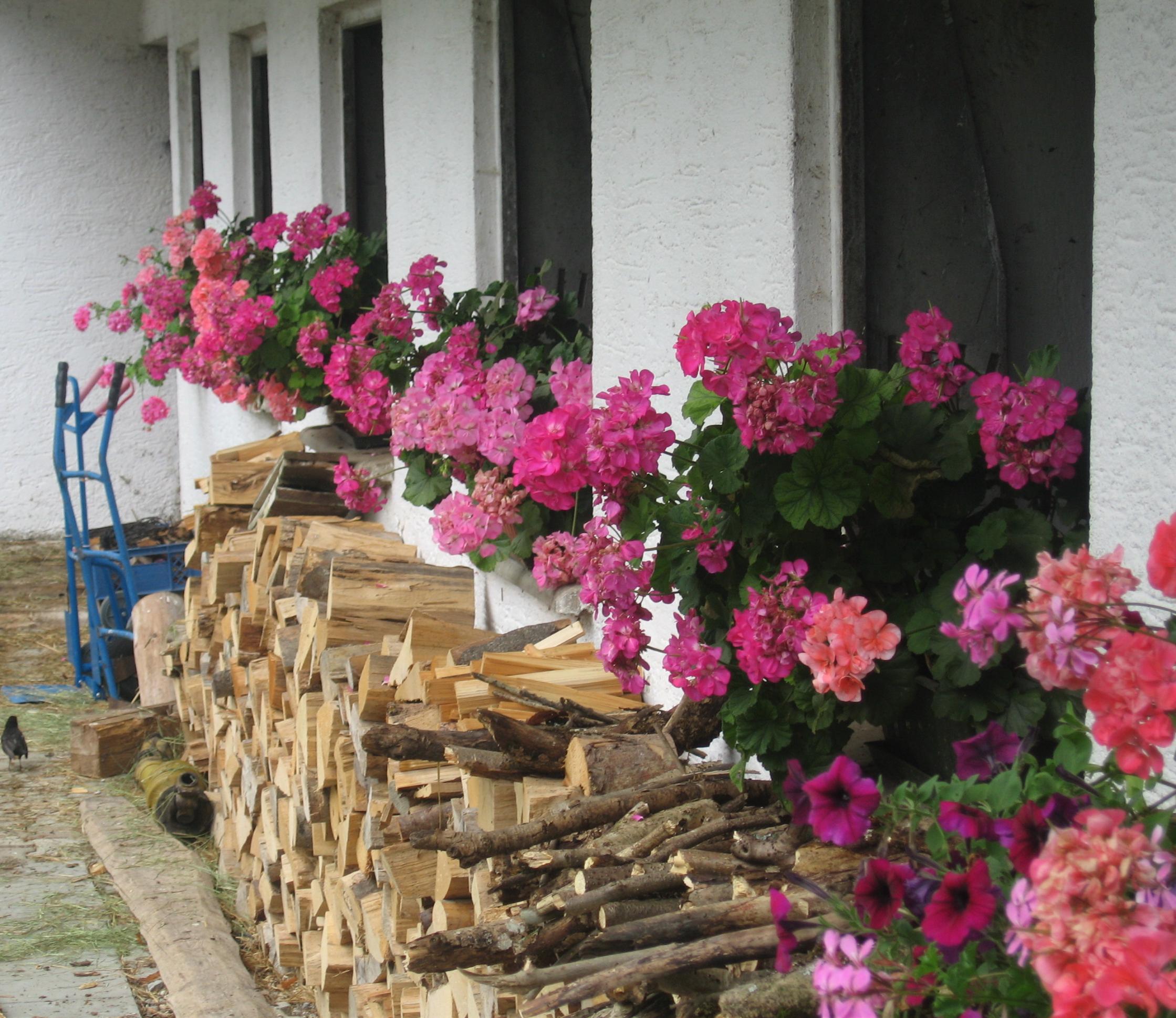 Holz für den Winter auf dem Vorderlipphof