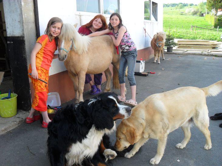 Hunde auf dem Friedahof