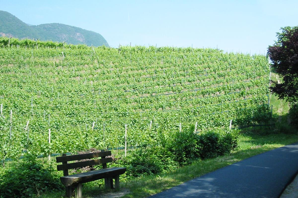 Idyllischer Wanderweg - quer durch die Weinberge