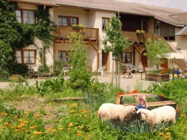 Im Hinterhof weiden die Schafe auf Schmidts Ferienhof