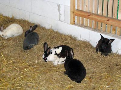 Im Kaninchenstall