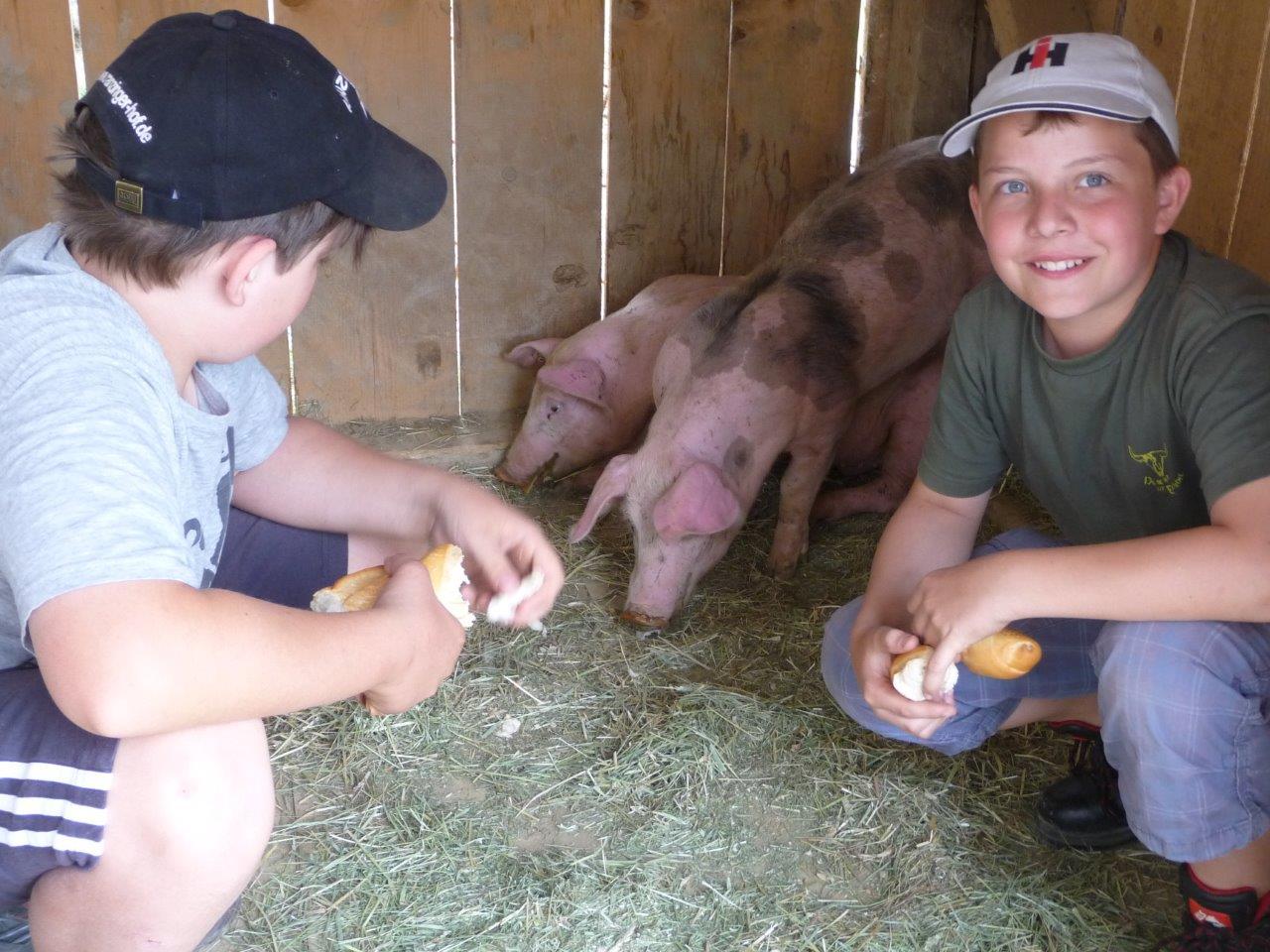 Im Schweinestall vom Ranzinger Hof