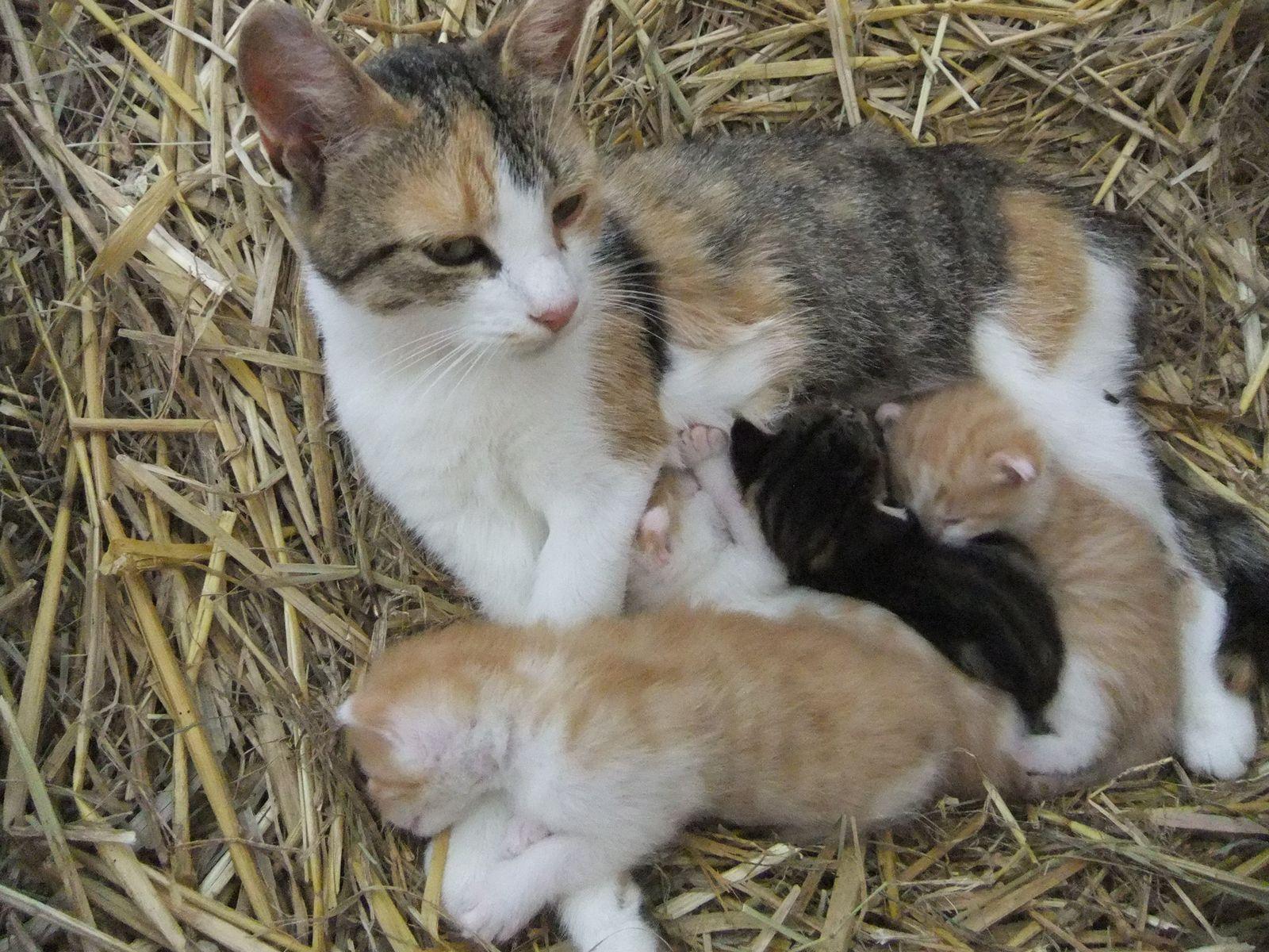 Immer wieder mal junge Kätzchen gibt es auf dem Hof Käsrah