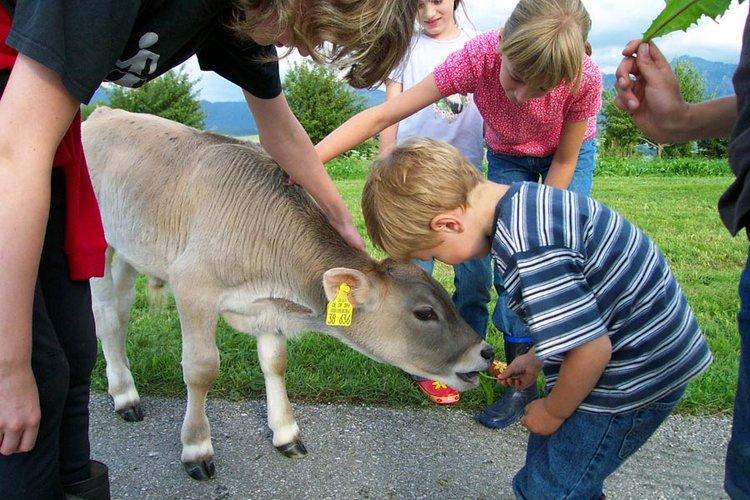 Kälber und Kinder immer wieder ein Anblick auf dem Salenberghof