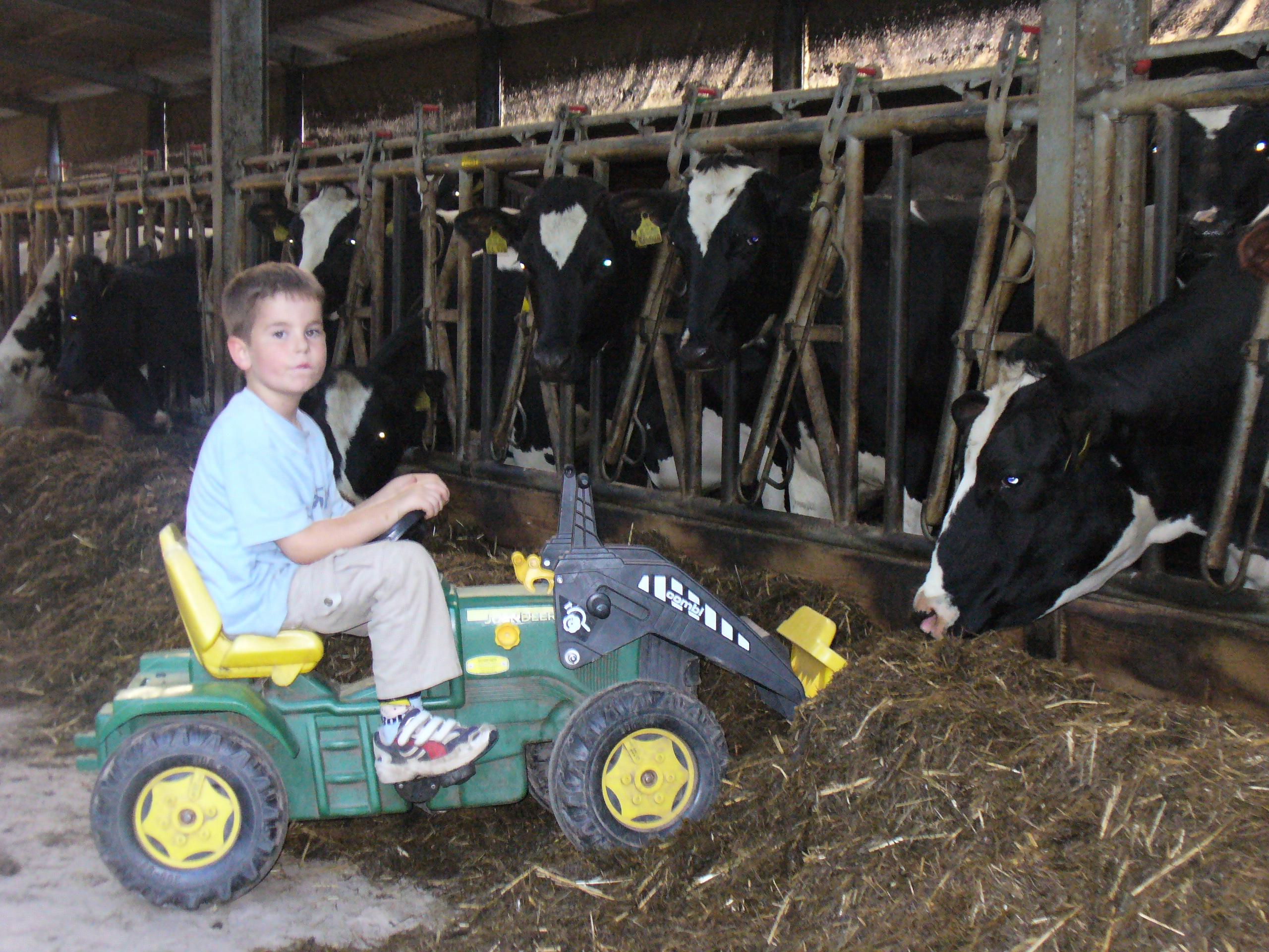 Kühe füttern auf dem Mayischhof